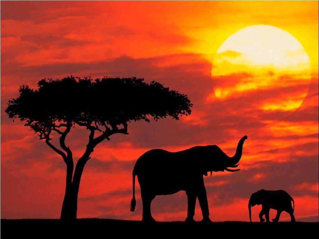 zakat-i-sloni